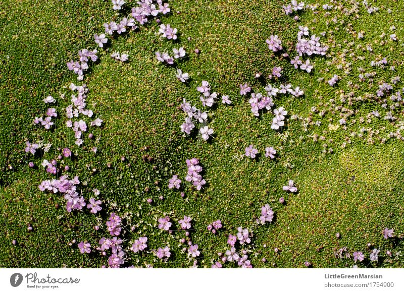 Flowerbed [4] Nature Plant Summer Beautiful Forest Blossom Garden Wild Park Esthetic Wet Soft Ground Firm Moss
