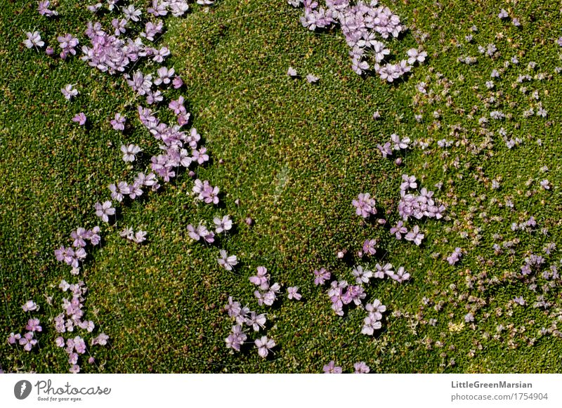 Flowerbed [2] Nature Plant Summer Beautiful Forest Blossom Garden Park Earth Esthetic Wet Soft Ground Firm Moss Wild plant
