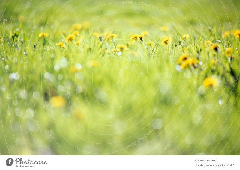 in the field near the street Colour photo Exterior shot Deserted Copy Space bottom Copy Space middle Neutral Background Day Light Blur Shallow depth of field