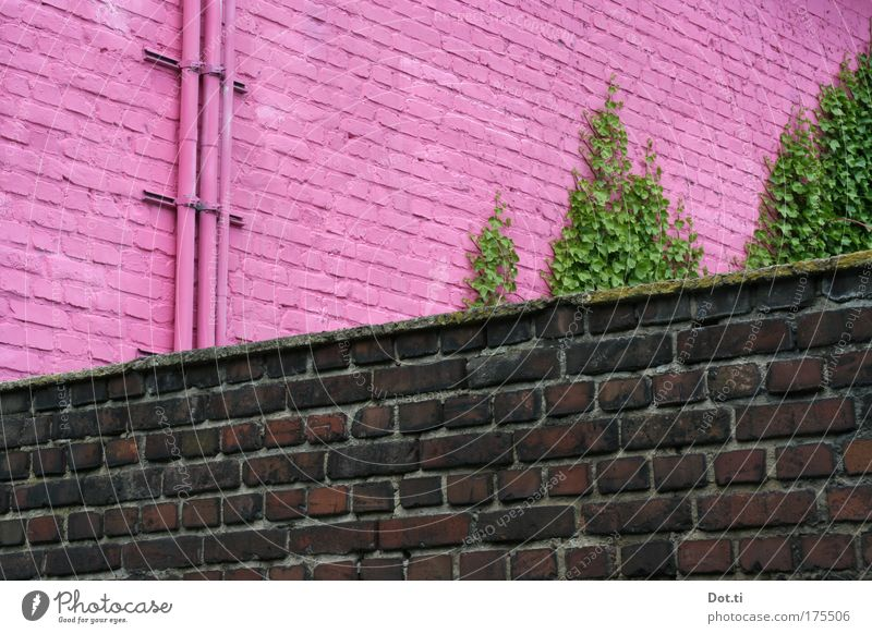 Green Colour Wall (building) Wall (barrier) Building Pink Facade Happiness Factory Kitsch Uniqueness Brave Brick Pipe Manmade structures