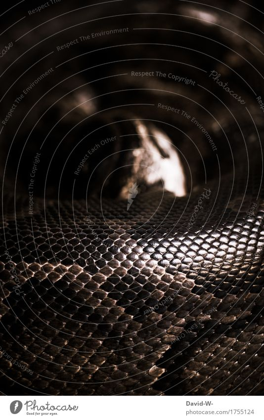 guessing game Art Environment Nature Animal Wild animal Scales Zoo 1 Sleep Exceptional Threat Brown Attentive Watchfulness Dangerous Respect Risk Calm Snake