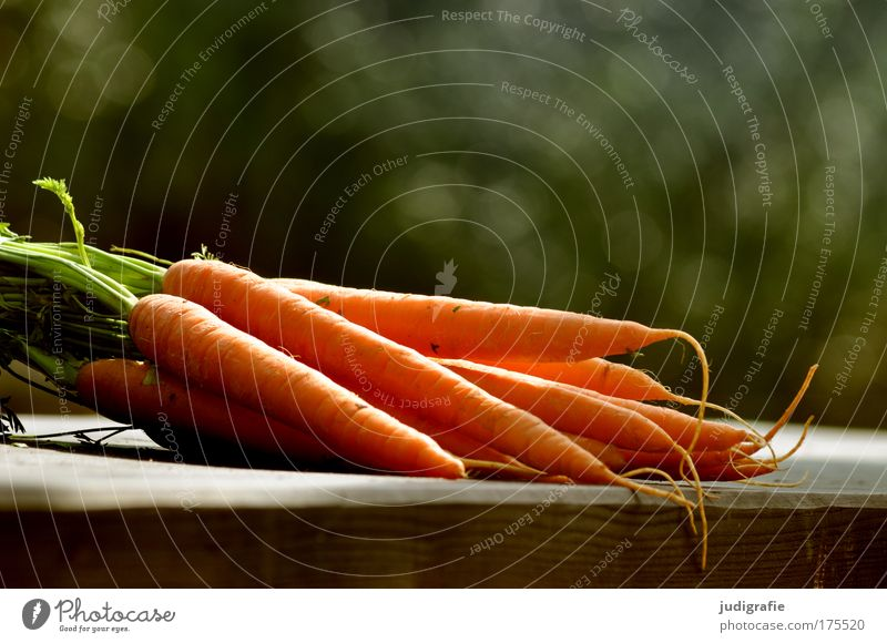 carrots Colour photo Exterior shot Day Food Vegetable Nutrition Garden Lie Healthy Delicious Carrot Fresh Harvest Raw vegetables Crunchy