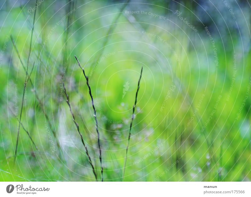 Nature Plant Summer Calm Relaxation Environment Grass Spring Natural Bushes Idyll Discover Ease Environmental protection Work and employment Gardening
