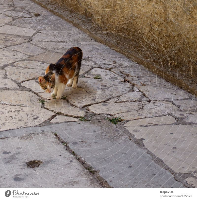 cat Colour photo Exterior shot Deserted Animal portrait Old town Pet Cat 1 Emotions Moody Love of animals Fear Uniqueness Curiosity Tourism Free-living Prowl