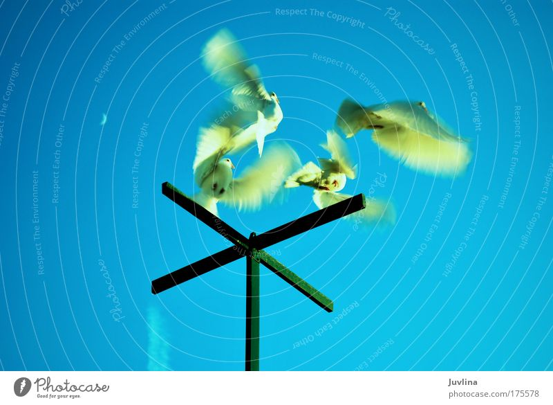 Nature Sky Blue Summer Animal Movement Dream Air Bird Environment Energy Angel Leisure and hobbies Wing Moon