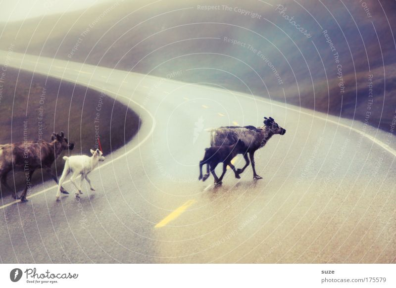 Nature Animal Environment Street Movement Freedom Wild Walking Wild animal Authentic Group of animals Asphalt Deer Curve Escape