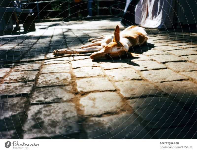dog days. Colour photo Subdued colour Exterior shot Close-up Lomography Deserted Copy Space bottom Morning Dawn Day Light Shadow Sunbeam Shallow depth of field