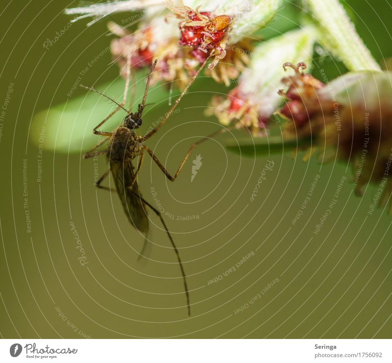 mosquito Environment Nature Landscape Plant Animal Flower Bushes Leaf Blossom Garden Park Meadow Forest Virgin forest Lakeside River bank Wild animal Fly