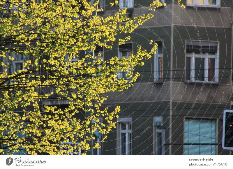 Beautiful Tree Green City House (Residential Structure) Spring Gray Building Beautiful weather