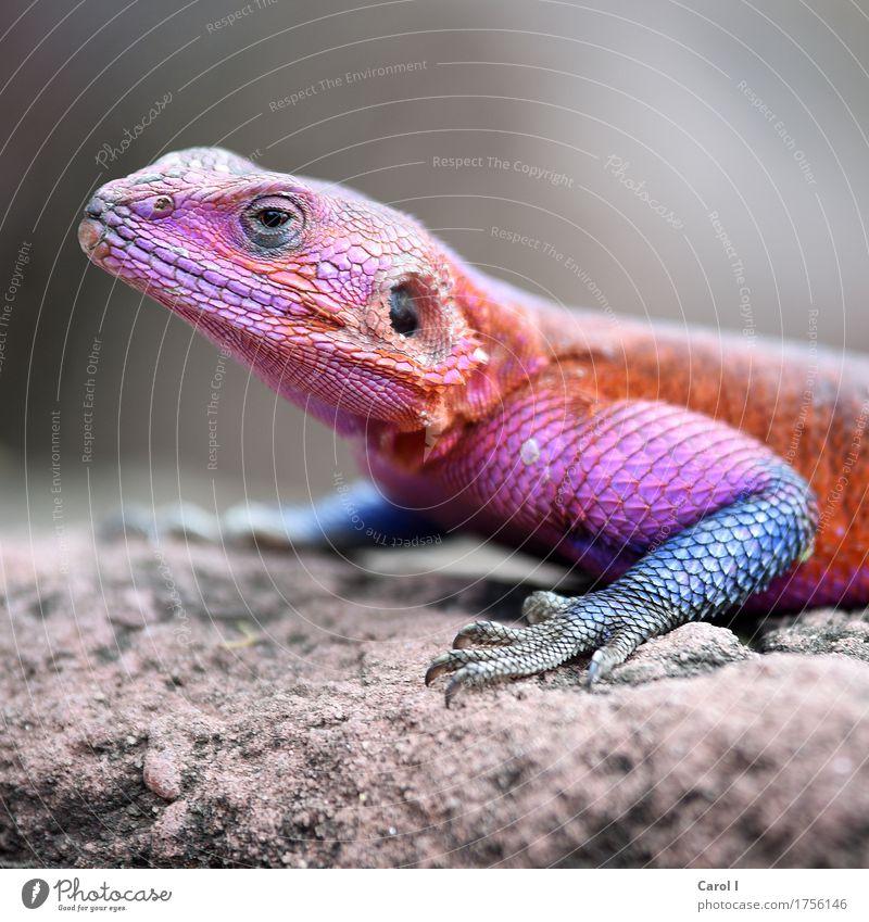 Nature Vacation & Travel Blue Animal Face Eyes Warmth Exceptional Rock Orange Pink Park Elegant Crazy Violet Animal face