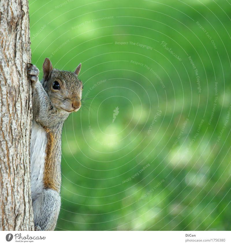 Nature Green Tree Animal Park Wild animal Observe Cute Curiosity Watchfulness Hang Brash Interest Cuddly Squirrel