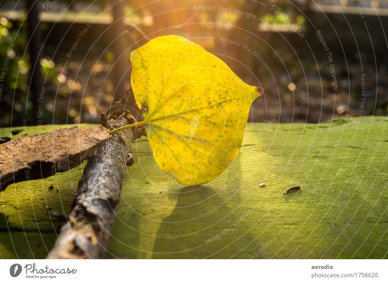 shining autumn leaf on a mossy bench in the sunlight Nature Plant Autumn Leaf Yellow Green Flare Sunlight Branch Moody Individual Bright Colours Colour photo