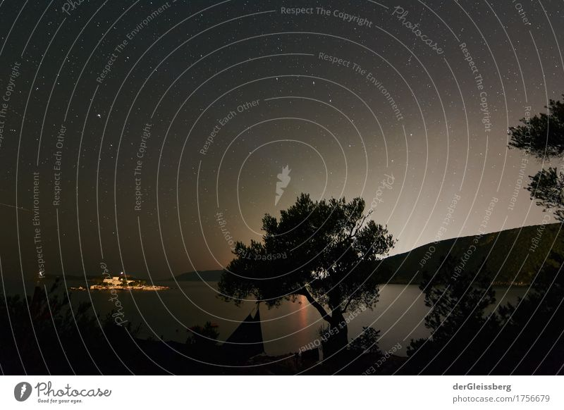 Light of the distance at the olive tree Nature Landscape Water Sky Cloudless sky Night sky Stars Summer Tree Hill Coast Ocean Montenegro Europe Wait Esthetic