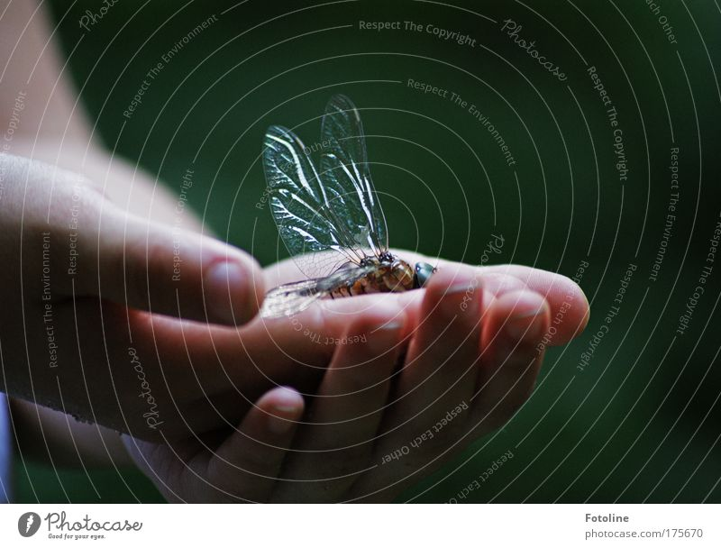 Human being Nature Old Hand Animal Environment Park Fingers Wing Touch Dragonfly Dragonfly wings