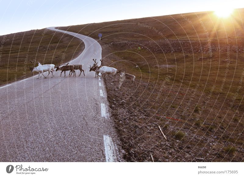 Nature Plant Sun Landscape Animal Environment Street Meadow Lanes & trails Earth Walking Wild animal Climate Authentic Group of animals Hill