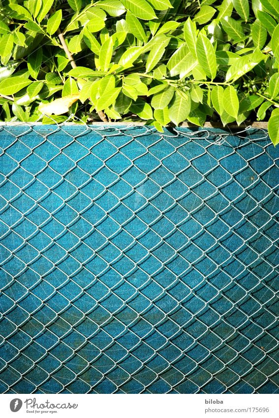 Green Plant Summer Loneliness Garden Environment Authentic Village Exceptional Fence Cliche Detached house Wire netting fence
