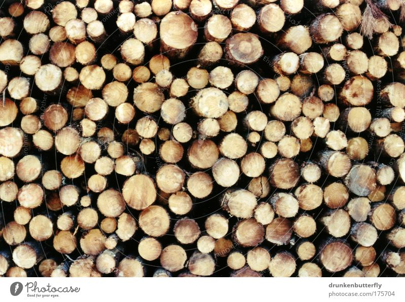 pine Colour photo Exterior shot Wood Nature Tree trunk Stone pine Stack Tree bark Harz Industry Fire Structures and shapes Saw