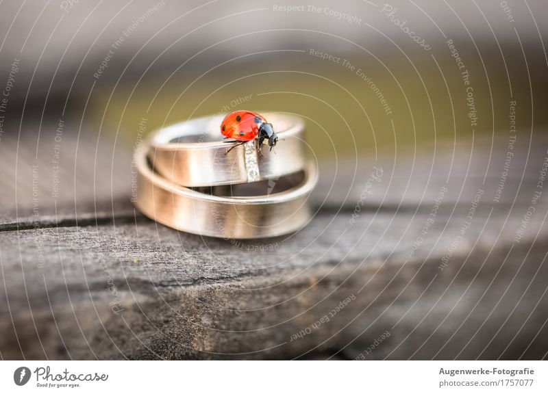 ring beetle Beetle Ladybird 1 Animal Ring Jewellery Wedding band Gold Red Matrimony Colour photo Exterior shot Close-up Detail Macro (Extreme close-up)