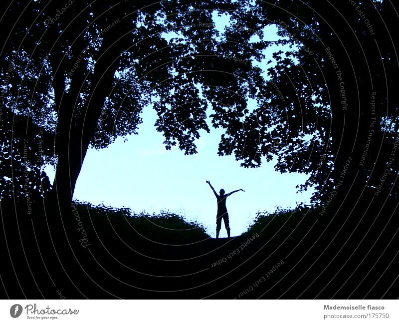 Silhouette in the forest against a light background Summer Hiking 1 Human being Landscape Sky Beautiful weather Tree Bushes Forest Movement Far-off places Blue
