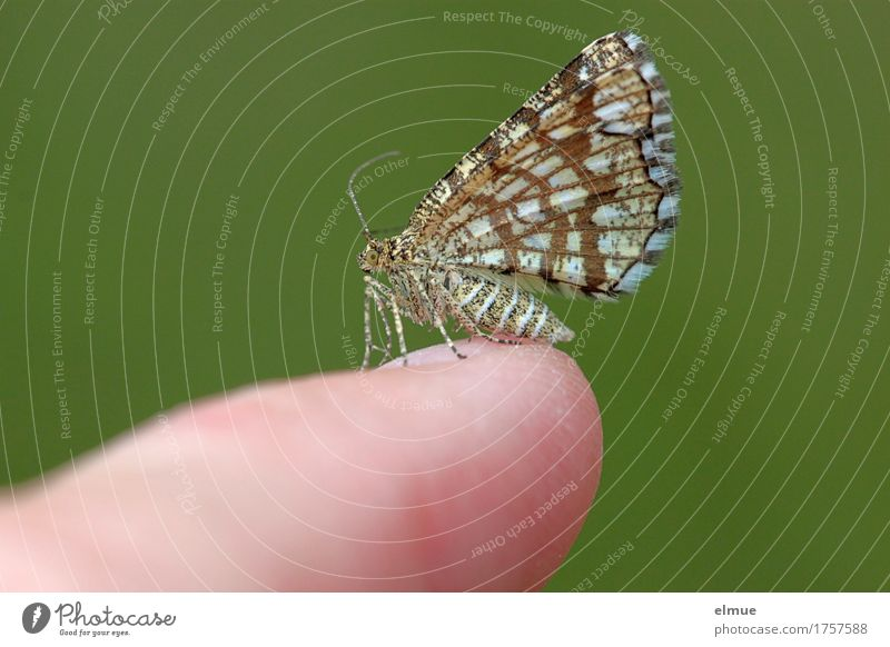 small talk Wild animal Butterfly Observe Touch Stand Elegant Small Near Curiosity Happy Acceptance Trust Love of animals Bizarre Design Freedom Ease Nature