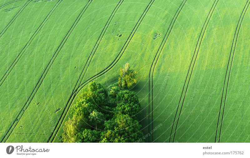 Nature Green Calm Forest Meadow Spring Arrangement Landscape Moody Field Environment Flying Free Earth Perspective Natural