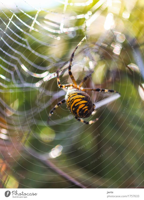 I think I'm crazy. Beautiful weather Meadow Animal Wild animal Spider 1 Exceptional Disgust Natural Nature Spider's web Black-and-yellow argiope Spin
