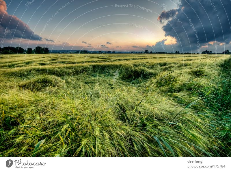 blades of grass in the wind at dusk with strong clouds Environment Nature Landscape Plant Sky Clouds Storm clouds Horizon Sunrise Sunset Summer Weather