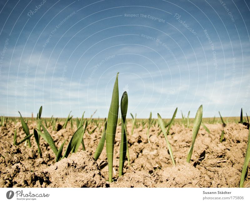 Sky Plant Summer Animal Meadow Grass Sand Bright Earth Field Growth New Beautiful weather Curiosity Hot Fight