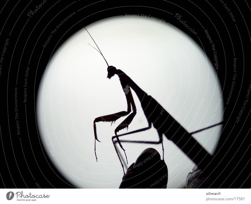 E.T. Praying mantis Insect Full  moon Extraterrestrial Transport flying insect Extraterrestrial being