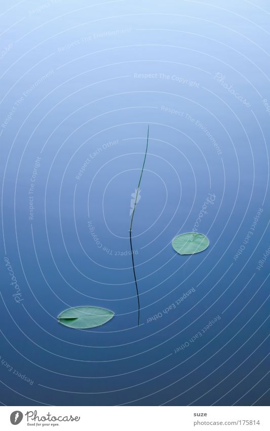 Nature Blue Water Plant Calm Relaxation Environment Cold Life Grass Lake Dream Art Contentment Elements Buddhism