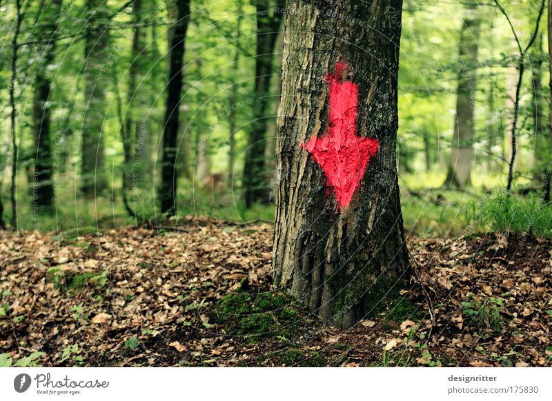 Nature Tree Plant Forest Landscape Graffiti Environment Signs and labeling Arrangement Ground Simple Arrow Sign Under Direction Virgin forest
