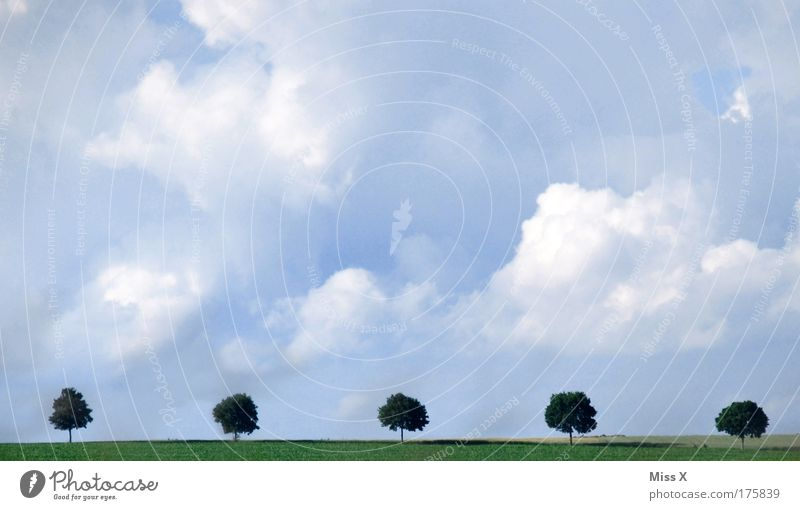 Nature Beautiful Tree Vacation & Travel Clouds Street Meadow Garden Lanes & trails Park Landscape Wind Trip Hope Growth