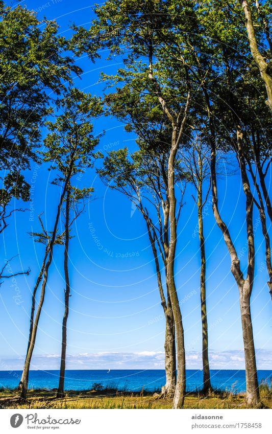Plant Blue Summer Water Landscape Calm Beach Beautiful weather Baltic Sea Serene Caution Attentive