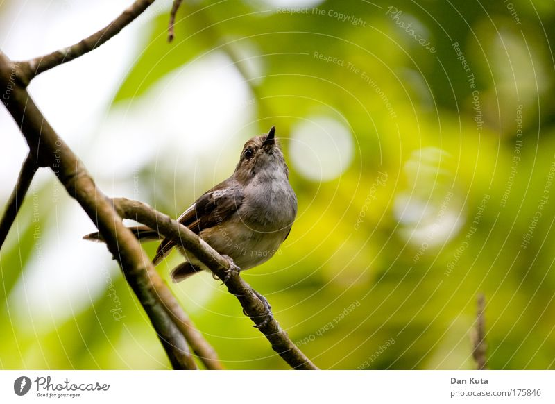 BirdPerspective Nature Animal Sun Sunlight Beautiful weather Plant Foliage plant Wild plant Leaf canopy Animal face Wing Zoo Sparrow 1 To hold on Flying Feeding