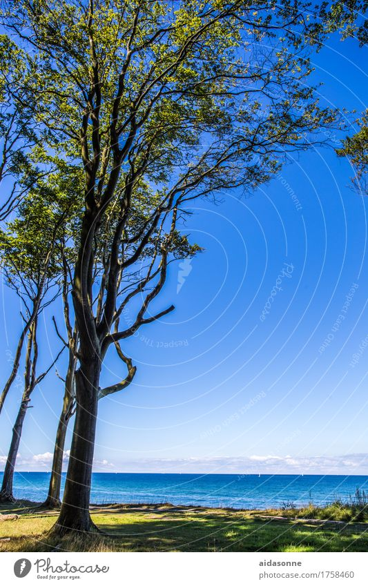 ghost forest Landscape Water Cloudless sky Beautiful weather Forest Baltic Sea Contentment Peaceful Attentive Dependability Caution Serene Patient Calm Book