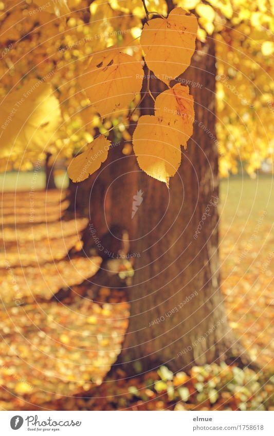 Nature Colour Tree Leaf Yellow Senior citizen Autumn Happy Bright Design Dream Park Gold Joie de vivre (Vitality) Branch Warm-heartedness