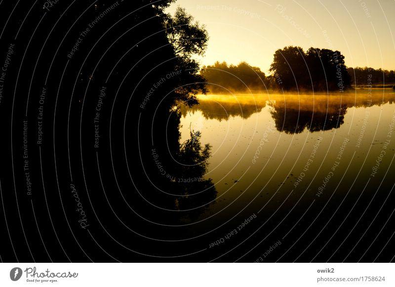 Plant Water Tree Landscape Loneliness Calm Far-off places Environment Lake Horizon Air Fog Illuminate Idyll Bushes Island