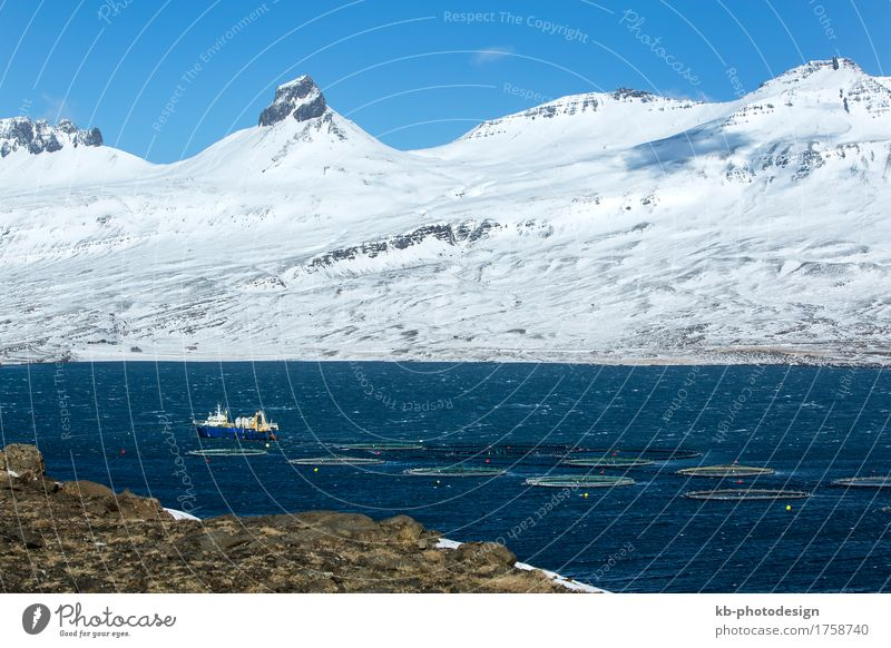 Fishing cutter in the North fjords of Iceland Vacation & Travel Tourism Adventure Far-off places Winter Profession Agriculture Forestry Industry Logistics fish