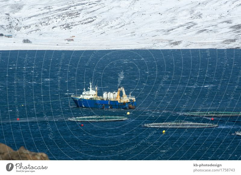 Fishing cutter in the North fjords of Iceland Vacation & Travel Tourism Adventure Far-off places Winter Profession Agriculture Forestry Industry Trade Logistics