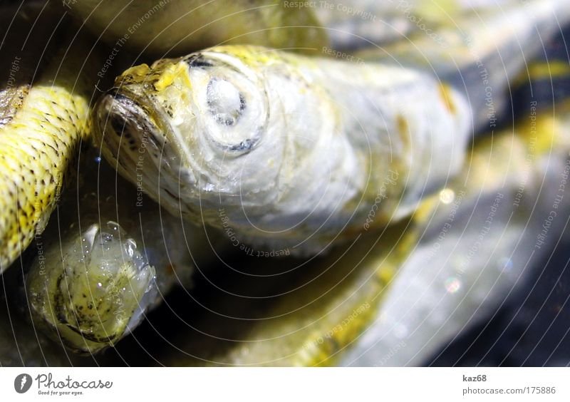 Ocean Animal Eyes Death Nutrition Food Ice Fresh Fish Group of animals Frozen Appetite To enjoy Delicious Fishing (Angle)