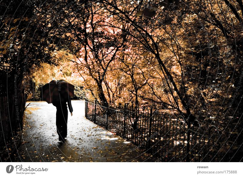 Human being Woman Nature Tree Flower Leaf Adults Forest Autumn Dark Cold Lanes & trails Garden Sadness Dream Park