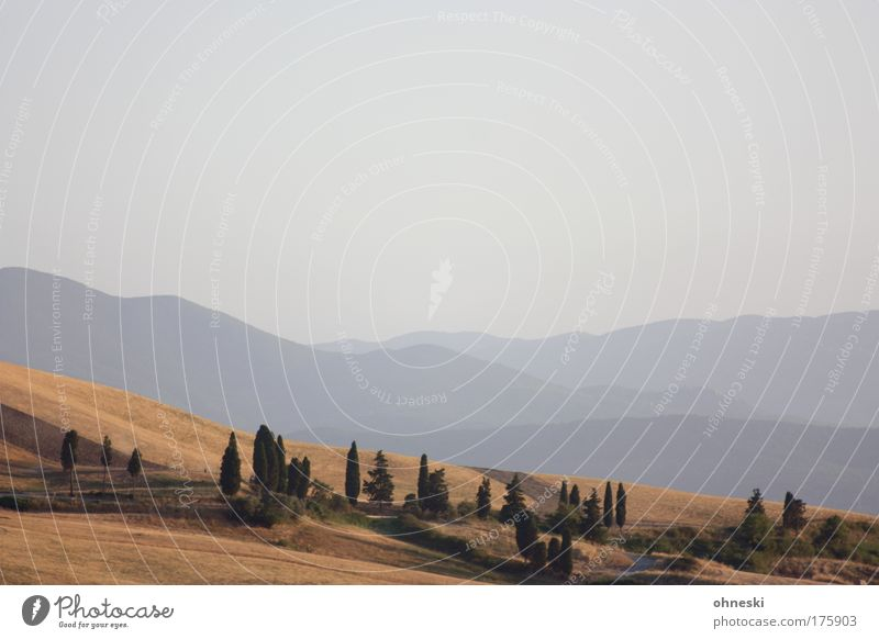 Tuscany Subdued colour Exterior shot Deserted Evening Panorama (View) Nature Landscape Plant Sky Horizon Tree Field Hill Mountain Volterra Italy Relaxation