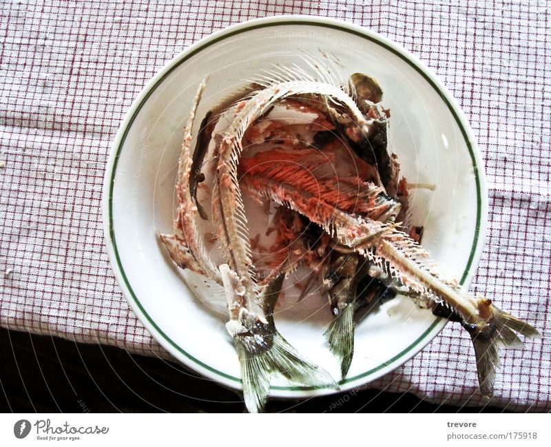 Dinner Colour photo Interior shot Close-up Deserted Copy Space left Bird's-eye view Food Fish Bowl Disgust Fish bone Trash Green Red Remainder