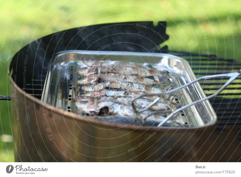 sardinade Colour photo Exterior shot Deserted Copy Space top Copy Space bottom Day Contrast Food Fish Nutrition Leisure and hobbies Hot Barbecue (event) Grill