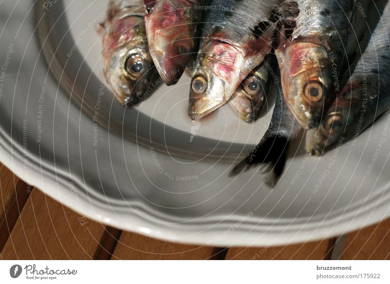 Fish from the head Sardine Plate Food Blood Crockery glaze Eyetail Scales Fin Looking Death Nutrition Fishing (Angle)