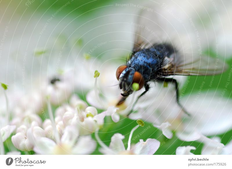 Beauty is relative! Environment Nature Plant Animal Blossom Wild animal Fly Hideous Blue Green Black White Appetite Thirst unloved Wing Eyes Transparent Looking