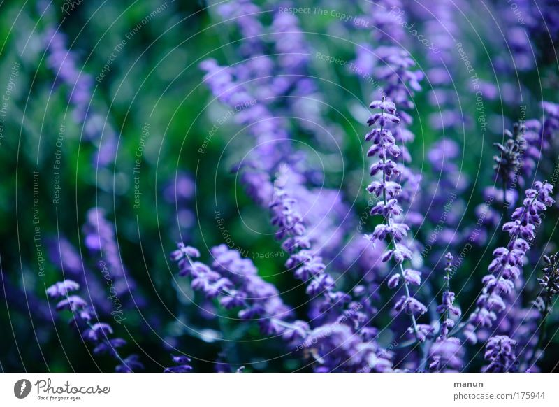 violet Colour photo Exterior shot Pattern Structures and shapes Copy Space left Copy Space top Day Contrast Sunlight Shallow depth of field Central perspective