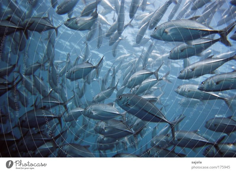 Nature Water Ocean Blue Animal Movement Together Underwater photo Environment Energy Fish Group of animals Wild animal Many Chaos