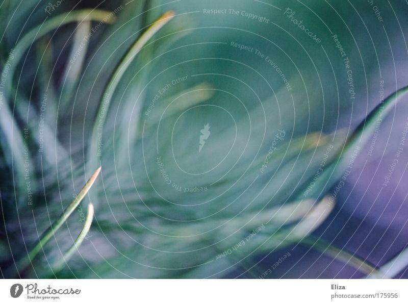 Nature Beautiful Plant Background picture Wild Esthetic Bushes Fantastic Dynamics Muddled Exotic Gorgeous