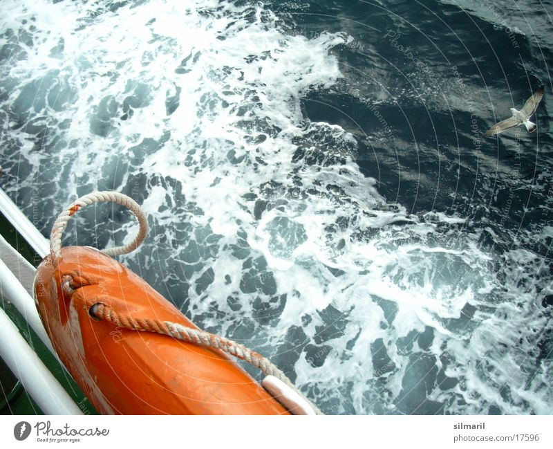 Water Ocean Watercraft Waves Europe Gale Passion Seagull Ferry Life belt Swell